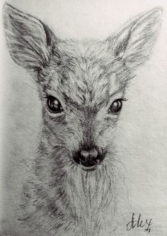 #fawn #drawing #pencil #cute #beautiful Pencil drawing of a fawn