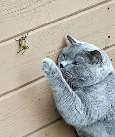 """""""Everything that moves serves to interest and amuse a cat."""" --F A Paradis de Moncrif"""