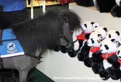 After visiting with the real pandas at Zoo Atlanta, Magic checked out the zoo store. There were hundreds of happy stuffed toy pandas but she was interested in the only one that looked a little grumpy.  How cute. (the Zoo invited two of Gentle Carousels mini therapy horses to the zoo.  A first.  The ponies loved seeing the animals, no fear.)