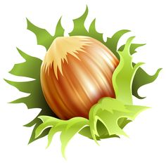 Hazelnut PNG Clipart Image   Gallery Yopriceville - High-Quality Images and Transparent PNG Free Clipart