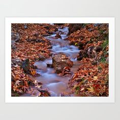 Stream detail in sycamore tree forest. Art Print by kostaspavlis Forest Art, Tree Forest, From The Ground Up, Buy Frames, All Over The World, Printing Process, Gallery Wall, Art Prints, Detail