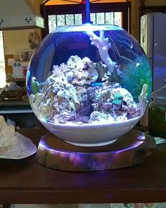 """Pico Reef Tank & Planted Fish Bowl - """" The Effective Pictures We Offer You About trends sneakers A quality picture can tell you many - Small Fish Tanks, Cool Fish Tanks, Saltwater Fish Tanks, Saltwater Aquarium, Round Fish Tank, Coral Reef Aquarium, Tropical Fish Aquarium, Aquarium Fish Tank, Aquarium House"""