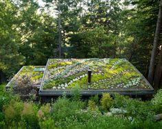 Rooftop Garden #GreenRoof
