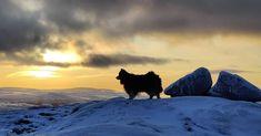 """722 tykkäystä, 8 kommenttia - Äijä-koira (@aijakoira) Instagramissa: """"Upea päivä, käytiin Isännän kanssa pitkä lenkki tunturissa. Mahtava auringonlasku 🌤️🐾🐻 Nyt kotiin…"""" Mountains, Nature, Travel, Instagram, Naturaleza, Viajes, Destinations, Traveling, Trips"""