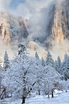 Frosty Winter Dreams