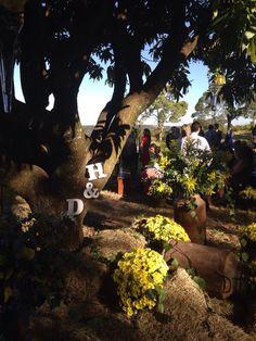 Casamento / wedding - decoração para casamento no campo durante o dia com feno e margaridas. Iniciais dos noivos na árvore.