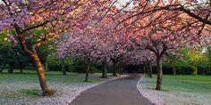 saltwell park in spring