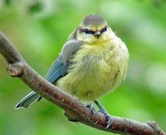 Casually found cute chubby bird decor topic
