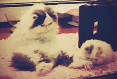 Mama cat and her kitten