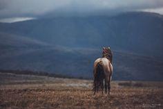 Após Perder-Me Na Vida, Encontrei A Liberdade Nos Cavalos