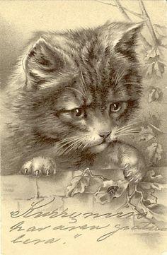 VINTAGE CAT ILLUSTRATION POSTCARD. FROM MONKEETREE VIA GATTI IN CARTOLINA
