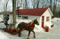 récolte de la sève avec les chevaux Farm Barn, Quebec City, Western Art, Horses, Antiques, Animals, Vintage, Maple Syrup, Christmas Things