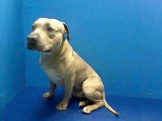 Brooklyn NY.  Muscle.  Male.  13 mths.  Dies in a.m.  See Urgent Part 2 on fb.***KILLED***