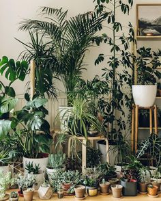 We couldn't go the whole #MonsteraMonday without sharing our own could we?! They're hiding amongst our other plant pals can you spot them?  #HaarkonHouse #Haarkon #Monstera #monsteradeliciosa #houseplants #plantgang #plants #indoorplants #indoorgarden #indoorjungle #interiorstyle #homestyle #cornersofmyhome #inspiration #plantspiration #plantlovers #plantstagram #plantsarefriends #plantstrong #interiordesign #iloveplants #leaflove #dscollections #dsfloral #natureinthehome #botanical