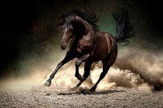 Power by Svetlana Golubenko on 500px