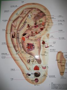 ear seeds | WARNING: EAR SEED right here! Ear Seeds Tips & Guide! | acupuncture ...