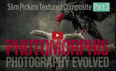 The final chapter in the series: Slim Pickins Part 3 completes the assembly of the Skull and Vulture composite photograph with the addition of rich textural effects.  Learn how to create this dramatic textured photo-composite in Photoshop. You can follow along with Doug Landreth using the free source files including all the photos, textures, and ACR Preset used in the Slim Pickins Tutorial Video.
