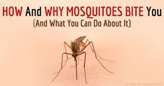 How and Why Mosquitoes Bite