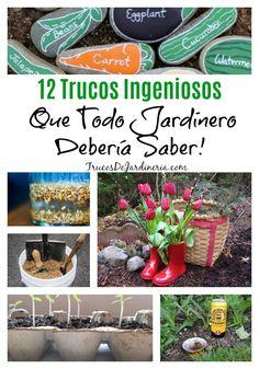 trucos ingeniosos de jardinería #jardineria #trucosdejardineria Plants, Bonsai, Gardening, Tips, Gardens, Growing Roses, Gardening Hacks, Edible Garden, Green Plants