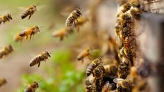 Imker werden – so kommen Sie zu eigenen Bienenstöcken