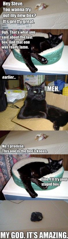 funny cats: Animals, Giggle, Funny Cats, Boxes, Funny Stuff, Funnies, Cat Lady