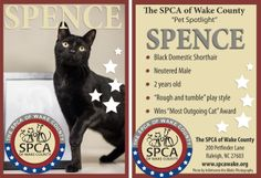 """The Baseball cards are part of our """"Long Timers"""" series. We made little trading cards that people could take and handout in the community to spread the word about these overlooked pets! www.spcawake.org/longtimers"""