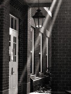 Tindrils of Light