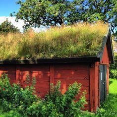 Lada i Harplinge, Halmstad, Sweden.  Photo: Sarah S Johansson