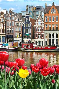 Amsterdam Itinerary   Amsterdam Hidden Gems   Unique Things to do in Amsterdam   Unusual things to do in Amsterdam   Non-touristy things to do in Amsterdam   Amsterdam travel tips   Places to go in Amsterdam   Cute Places in Amsterdam   Amsterdam Photo Spots   Amsterdam Netherlands Bucket List   Europe Travel   Amsterdam Travel   Amsterdam Photography   Amsterdam Red Light District   Amsterdam Travel Photography   Amsterdam Travel Things to do in   Amsterdam Travel Photos #Amsterdam… Tulip Painting, Love Painting, Amsterdam Things To Do In, Amsterdam Photos, Hiking Europe, Europe Travel Guide, Travel Destinations, Amsterdam Photography, Travel Photography
