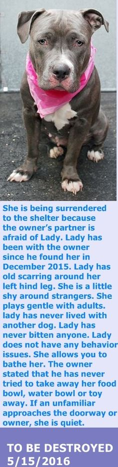 KILLED 5/15/16 Manhattan Center My name is LADY. My Animal ID # is A1072959. I am a female gray and white am pit bull ter mix. The shelter thinks I am about 2 YEARS I came in the shelter as a OWNER SUR on 05/09/2016 from NY 10458, owner surrender reason stated was PERS PROB. http://nycdogs.urgentpodr.org/lady-a1072959/