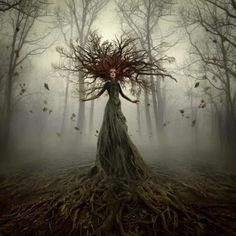 Trees in Mythology - Myth Encyclopedia - Greek, god, story, names ...