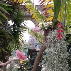 Tatton Park glass house Glass Houses, Field Guide, Park, Plants, Beautiful, Glass House, Parks, Plant, Planets
