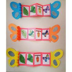 Life cycles preschool - Nature and society Preschool Education, Kindergarten Activities, Preschool Activities, Preschool Classroom, Life Cycle Craft, Hungry Caterpillar Activities, Art For Kids, Crafts For Kids, Insect Crafts