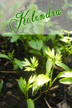 Plants, Blog, Plant, Planting