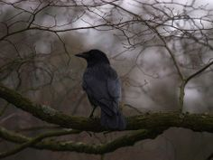 """The Murmuring Cottage   This makes me think of """"...quoth the raven, """"Nevermore!"""""""
