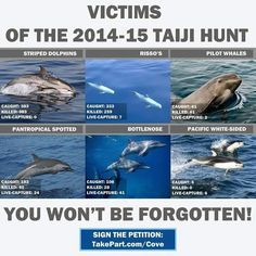 The casulties of the 2014-2015 dolphin massacre & enslavement season in Taiji, Japan.