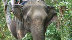 The Secret Lives of Nepal's Elephants #nepal #asianelephant #elephants #bucketlist #elephantrides