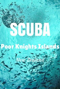 The Poor Knights Islands in New Zealand offers world-class SCUBA diving - and by far the best diving in NZ!