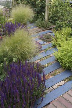 wonderful dymondia margaretae for lawn ideas