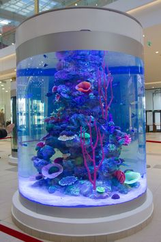 10 Tips on Designing a Freshwater Nature Aquarium Wall Aquarium, Home Aquarium, Aquarium Design, Aquarium Fish Tank, Fish Tank Wall, Cool Fish Tanks, Tropical Fish Tanks, Saltwater Tank, Saltwater Aquarium
