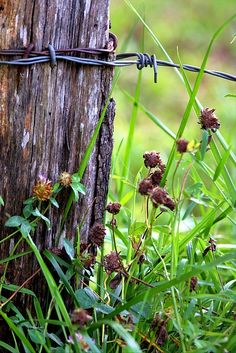 Lichen Photograph - Wire Fence Post by Carol R Montoya Barbed Wire Drawing, Barbed Wire Fencing, Rustic Photography, Photography Themes, Nature Photography, Blue Tit Tattoo, Monet, Wooden Fence Posts, Country Fences