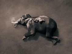 This body of work by Gregory Colbert is so inspiring that I was moved emotionally by every single image.