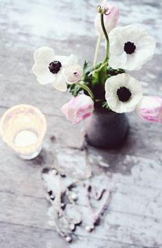 artdelacuriosite:    Des fleurs pour lhiver  Source