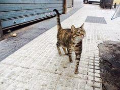 RED - Urgencias Gatos: SUPER SOS!! GATA PRECIOSA Y CARIÑOSA EN LA CALLE - MADRID