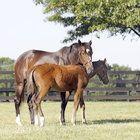 Rachel Alexandra: 2009 Preakness Winner/Horse of the Year is now doting mother.