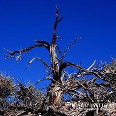 Sagebrush bird. #desert #sagebrush #nature #landscape #abstract #art #creative #natural #beauty #outdoors #explore #in2nature #hikelife #adventure