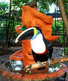 Tucán parque ecológico los Ocarros Villavicencio https://blogtrip.org/parque-tayrona-santa-marta-colombia-viaje-natural/