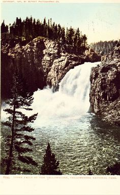 Vintage National Park Postcards 1905 Yellowstone Park,Wyo. Copyright 1905 by Detroit Photographic Co. 8799 Item #B4480