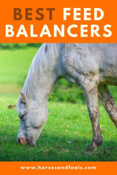 Looking for the best horse feed balancer on the market in Here are 3 top rated horse feed balancers that you can buy online today. Horse Feed, Horse Care, Horseback Riding, Mineral, Equestrian, Protein, Nutrition, Concept, Exercise