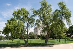 Capital grounds - Google Search